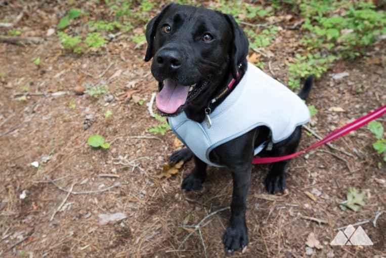 Camping gear list: campsite-friendly dog gear